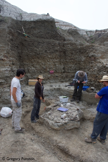 A styracosaur skeleton at the bottom of the hole we dug for it